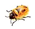 logo firebug